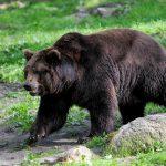クマに襲われないために ~ クマよけグッズをご紹介!